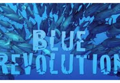 """BLUE REVOLUTION. L'ECONOMIA AI TEMPI DELL'USA E GETTA"""
